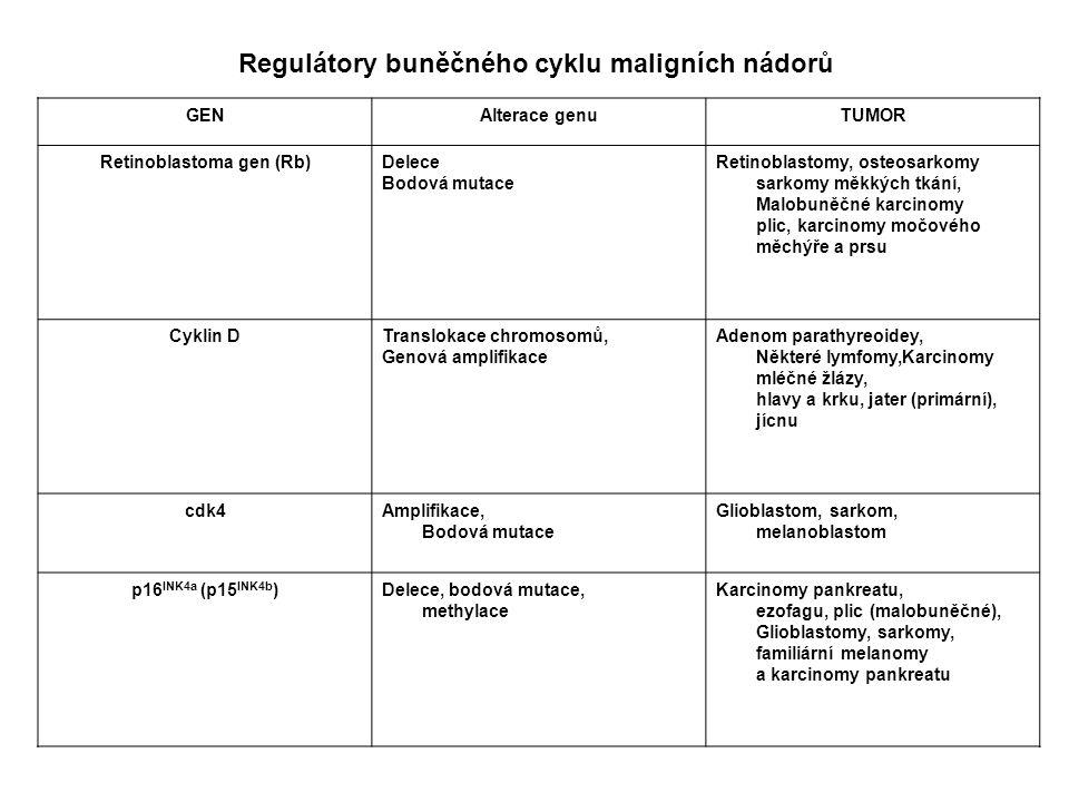 Retinoblastoma gen (Rb)