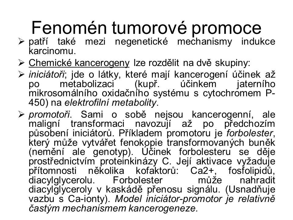 Fenomén tumorové promoce