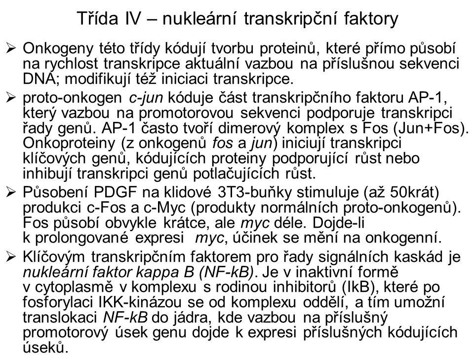 Třída IV – nukleární transkripční faktory