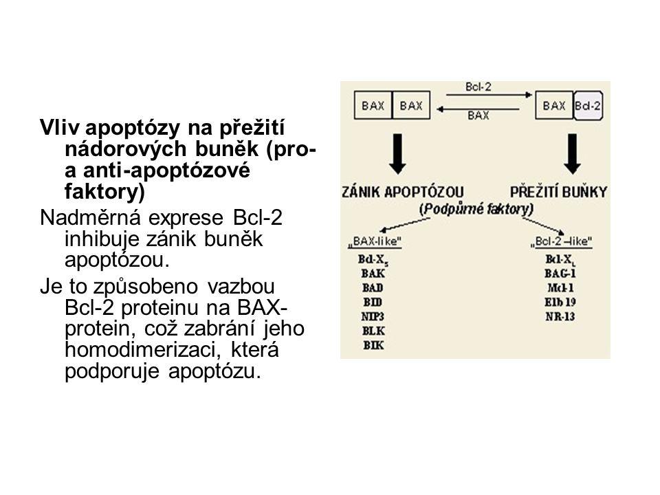 Vliv apoptózy na přežití nádorových buněk (pro- a anti-apoptózové faktory)
