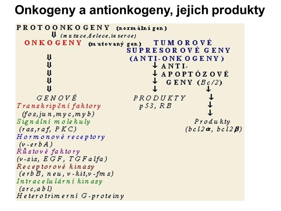Onkogeny a antionkogeny, jejich produkty