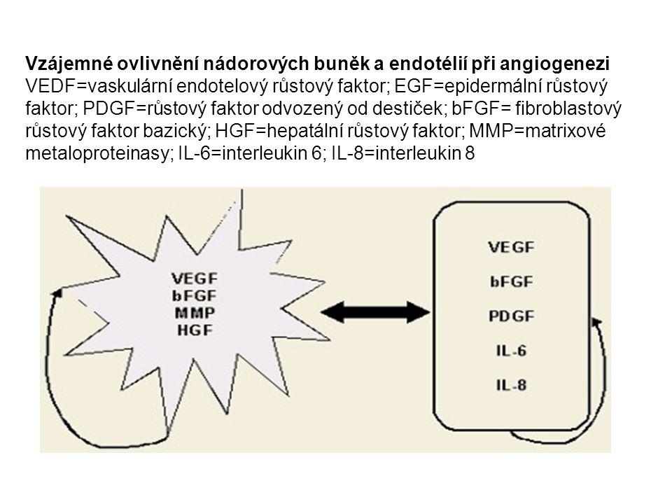Vzájemné ovlivnění nádorových buněk a endotélií při angiogenezi VEDF=vaskulární endotelový růstový faktor; EGF=epidermální růstový faktor; PDGF=růstový faktor odvozený od destiček; bFGF= fibroblastový růstový faktor bazický; HGF=hepatální růstový faktor; MMP=matrixové metaloproteinasy; IL-6=interleukin 6; IL-8=interleukin 8