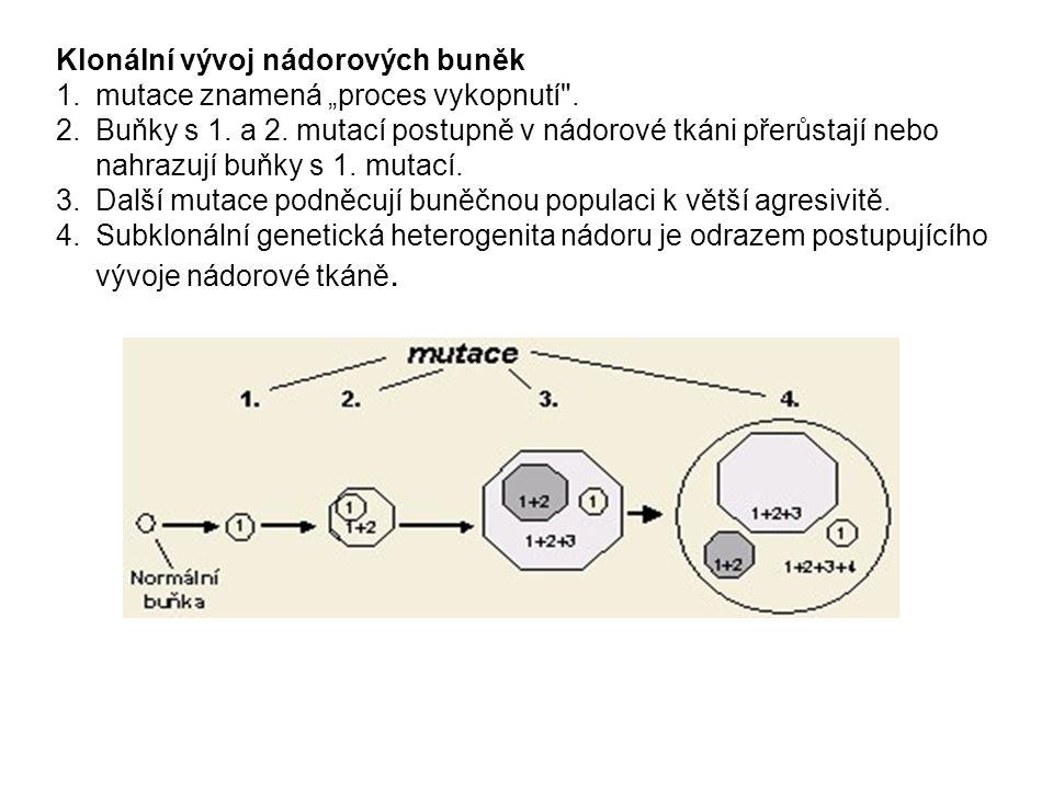 """Klonální vývoj nádorových buněk mutace znamená """"proces vykopnutí ."""
