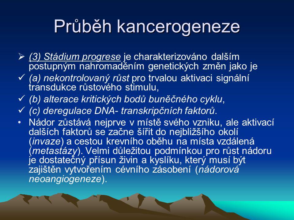 Průběh kancerogeneze (3) Stádium progrese je charakterizováno dalším postupným nahromaděním genetických změn jako je.