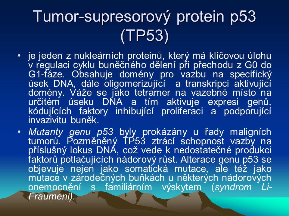 Tumor-supresorový protein p53 (TP53)