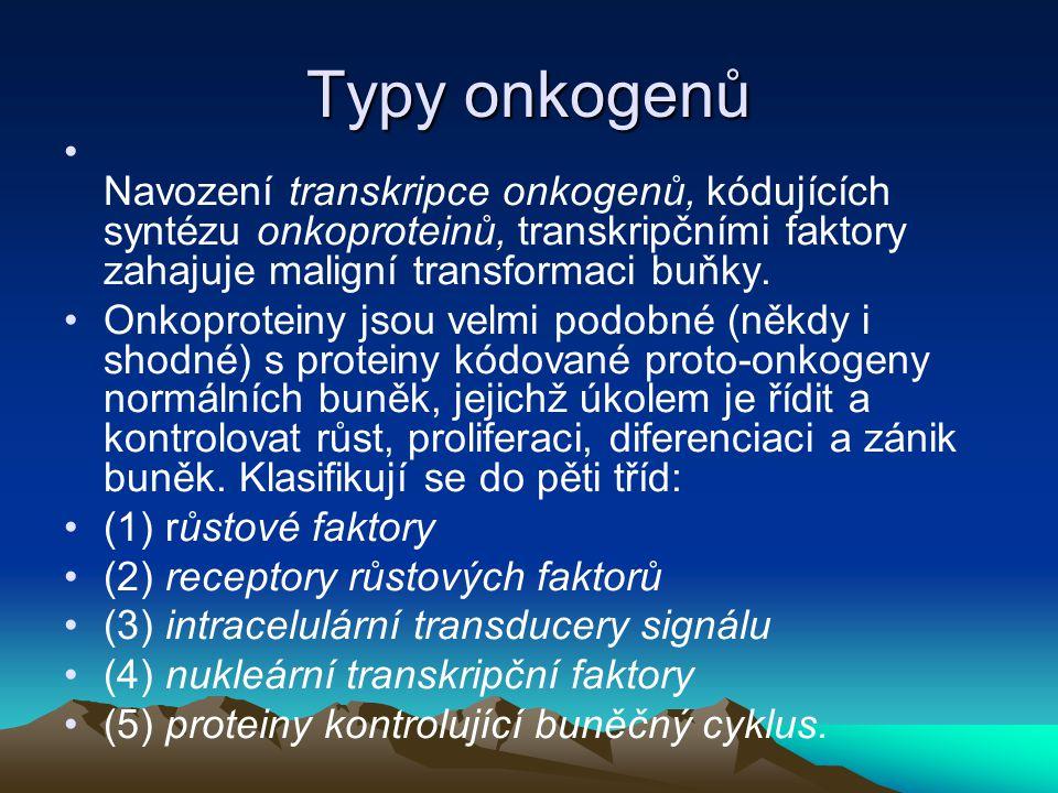 Typy onkogenů Navození transkripce onkogenů, kódujících syntézu onkoproteinů, transkripčními faktory zahajuje maligní transformaci buňky.