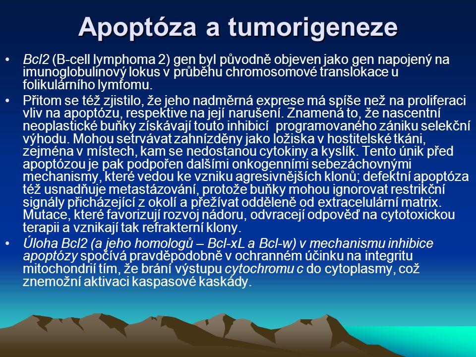 Apoptóza a tumorigeneze