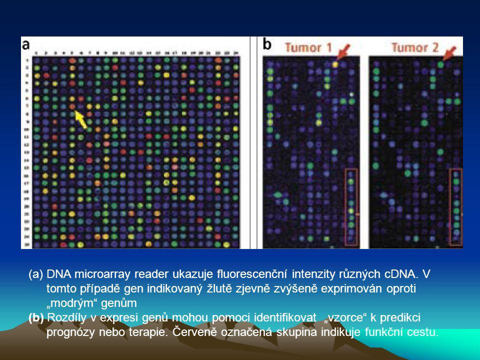DNA microarray reader ukazuje fluorescenční intenzity různých cDNA