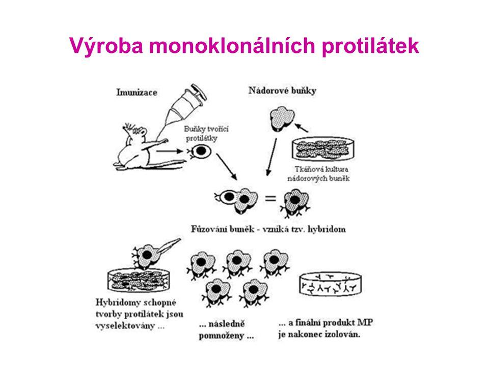 Výroba monoklonálních protilátek