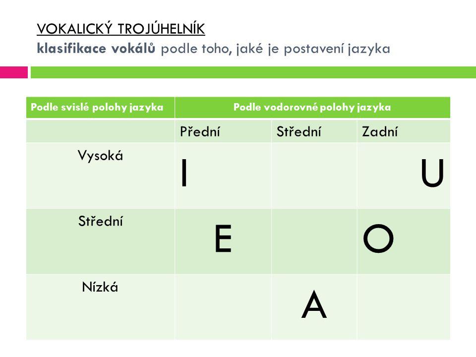 Podle vodorovné polohy jazyka
