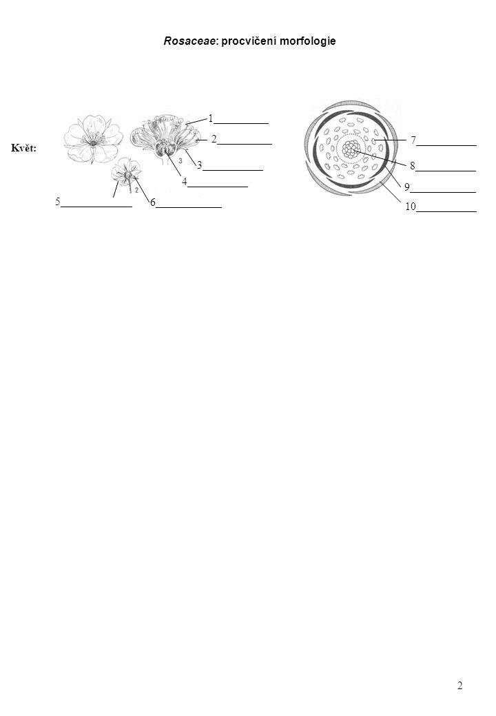 Rosaceae: procvičení morfologie