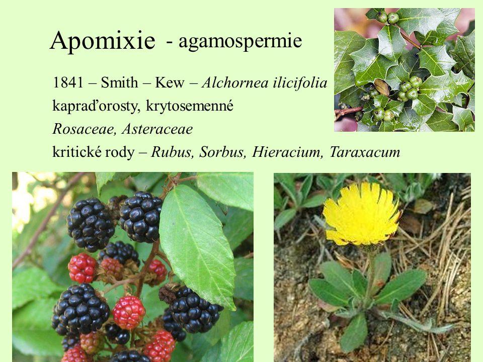 Apomixie - agamospermie 1841 – Smith – Kew – Alchornea ilicifolia