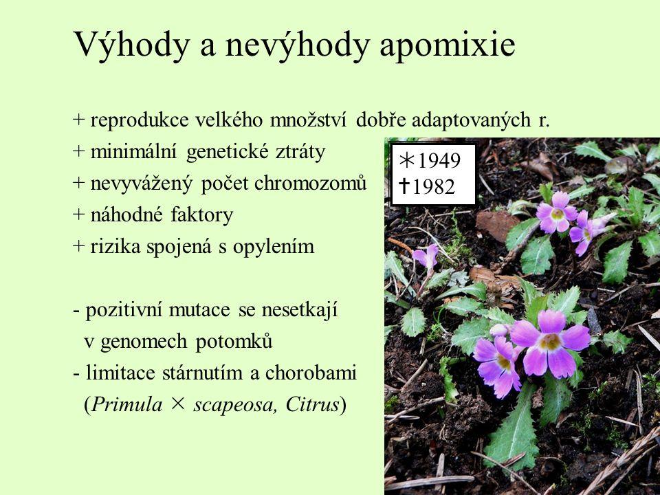 Výhody a nevýhody apomixie