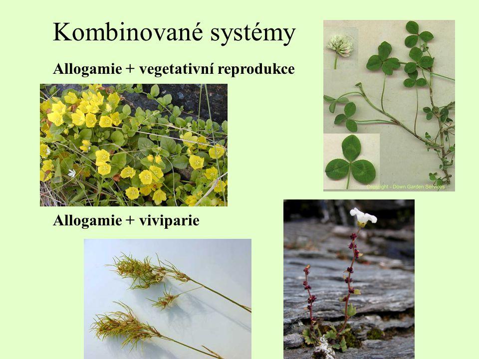 Kombinované systémy Allogamie + vegetativní reprodukce