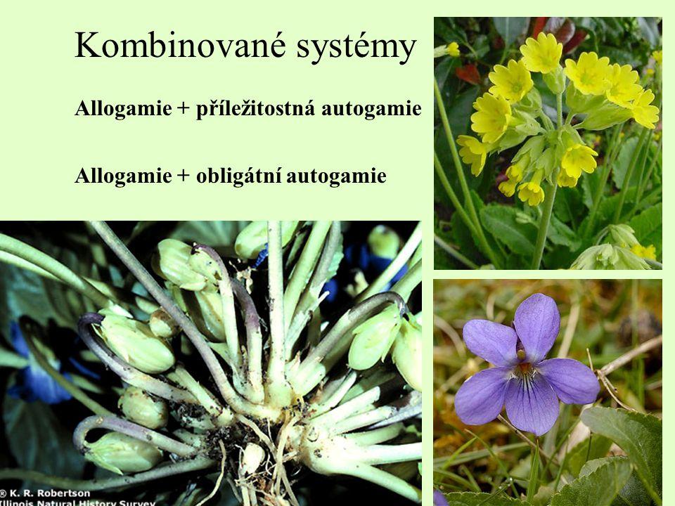 Kombinované systémy Allogamie + příležitostná autogamie