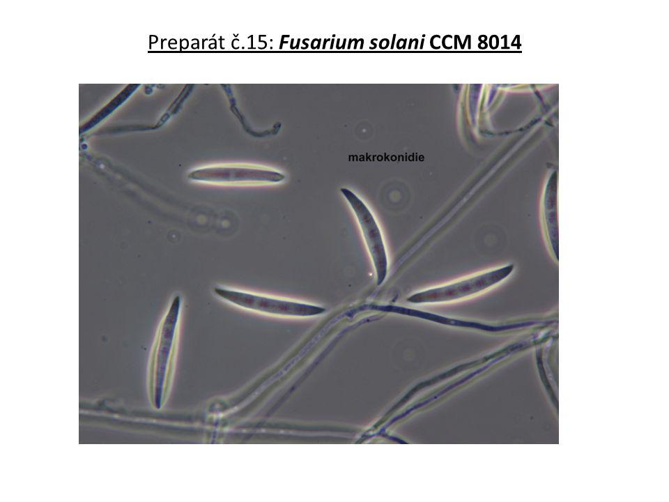 Preparát č.15: Fusarium solani CCM 8014