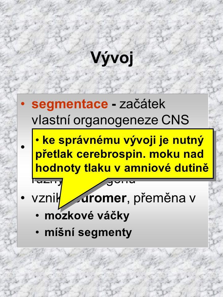 Vývoj segmentace - začátek vlastní organogeneze CNS
