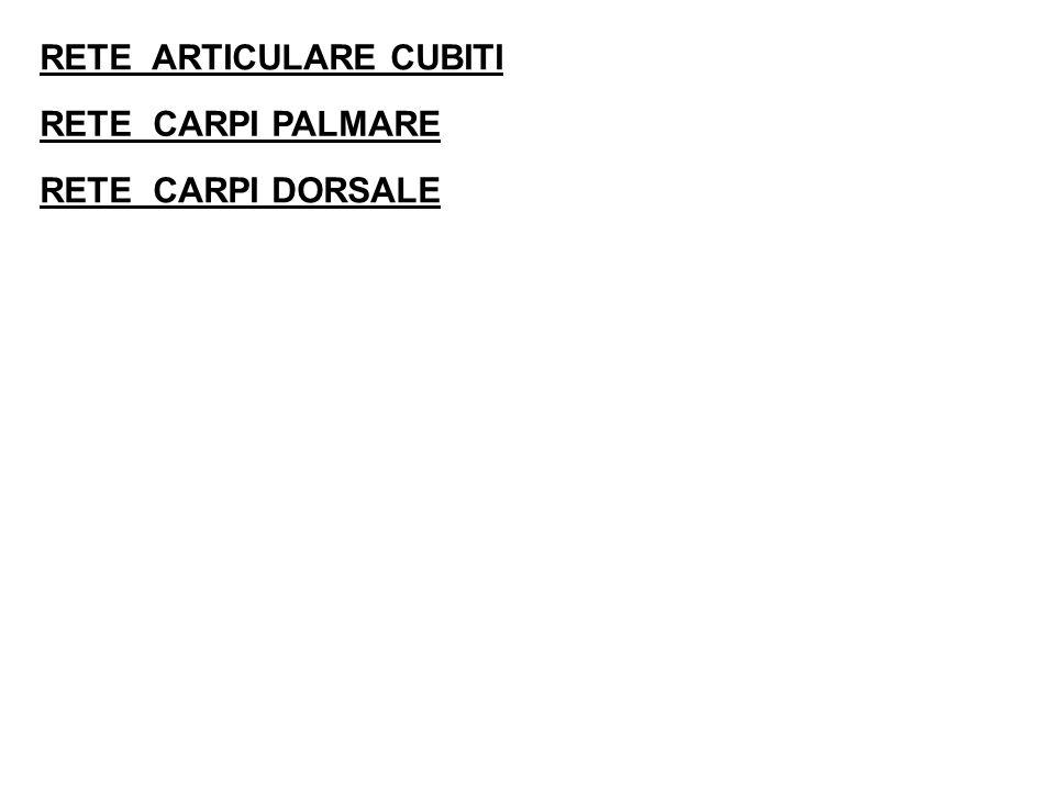 RETE ARTICULARE CUBITI
