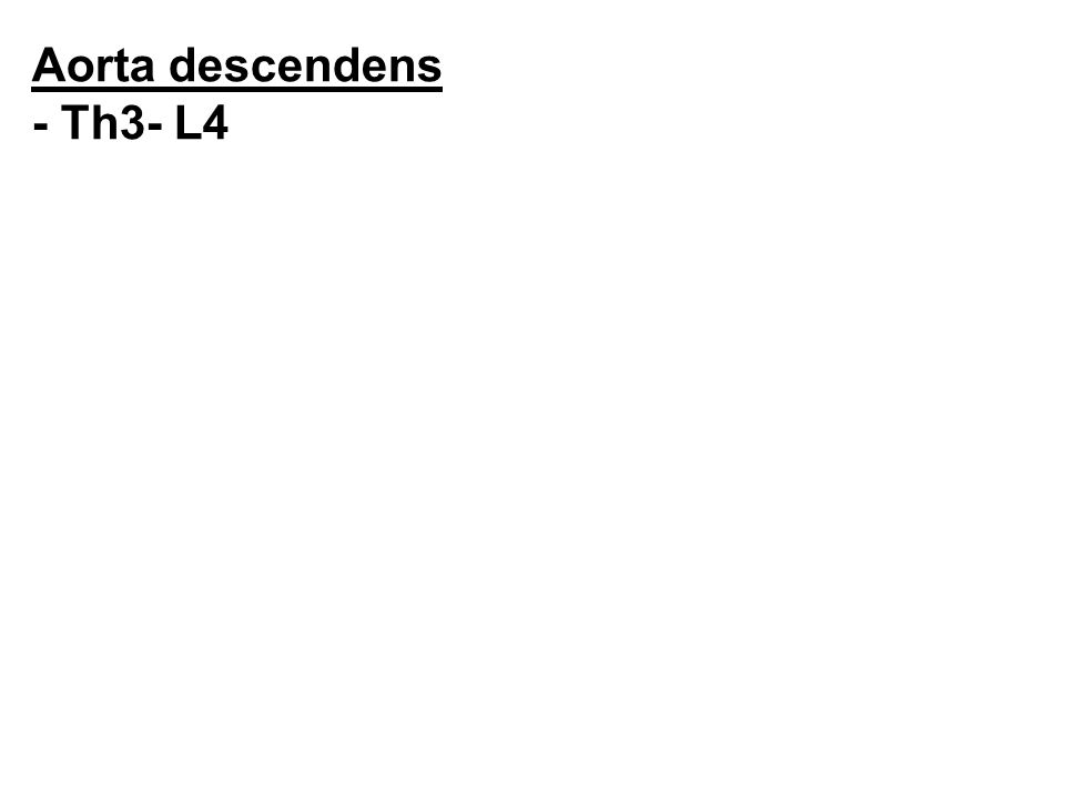 Aorta descendens - Th3- L4 Aorta descendens - Th3- L4