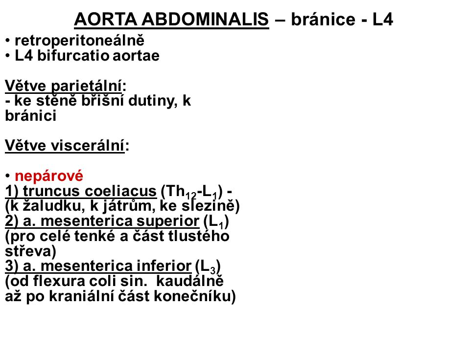 AORTA ABDOMINALIS – bránice - L4