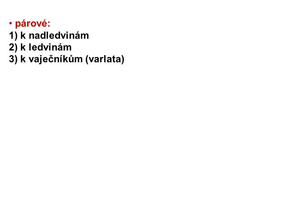 párové: 1) k nadledvinám 2) k ledvinám 3) k vaječníkům (varlata)