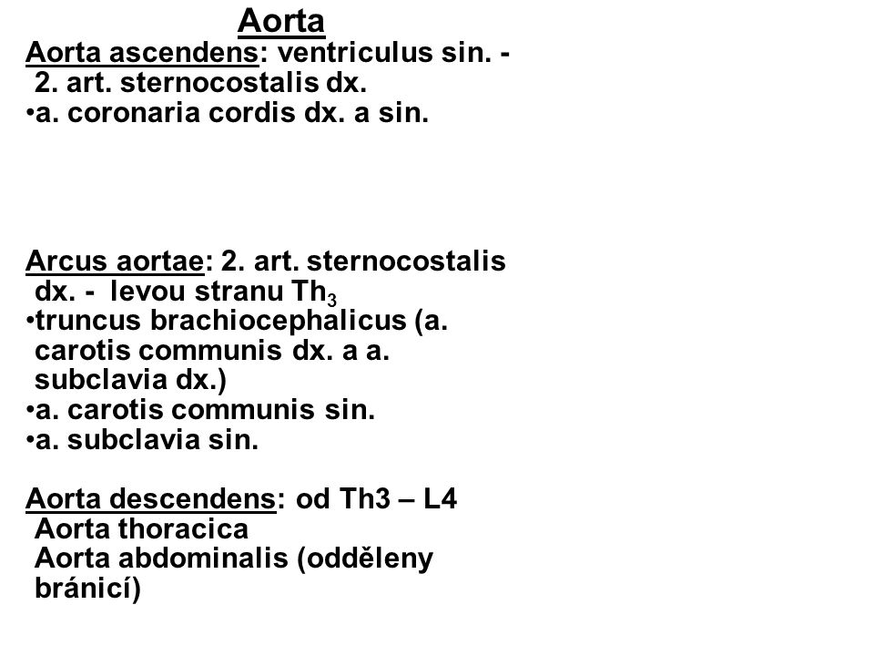Aorta Aorta ascendens: ventriculus sin. - 2. art. sternocostalis dx.
