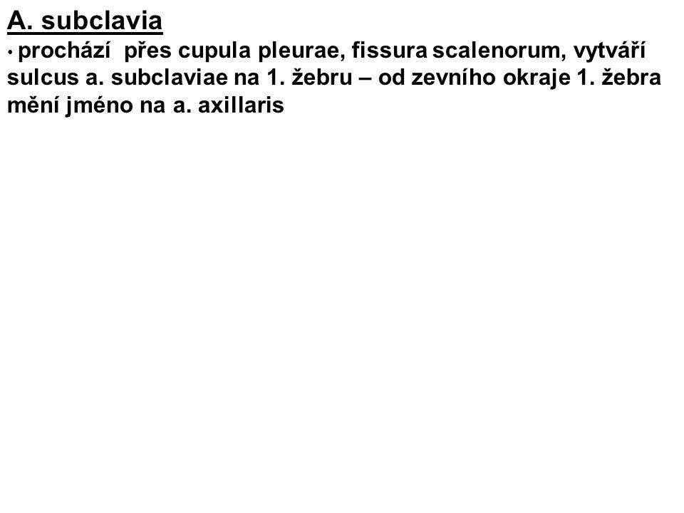 A. subclavia
