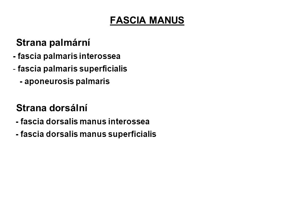 FASCIA MANUS Strana palmární Strana dorsální