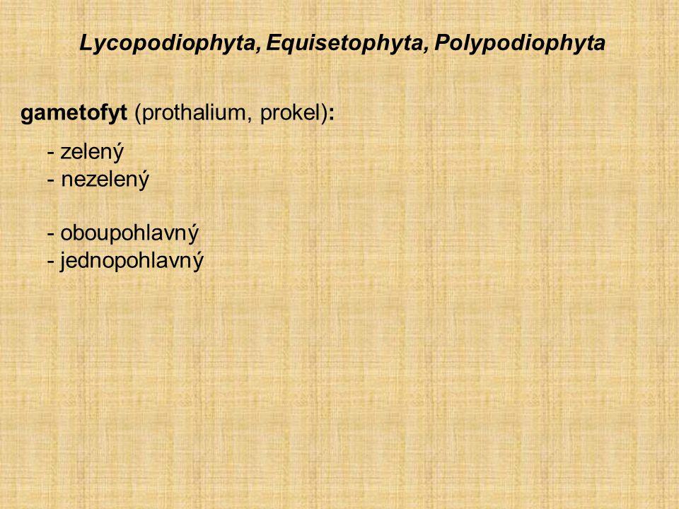 Lycopodiophyta, Equisetophyta, Polypodiophyta