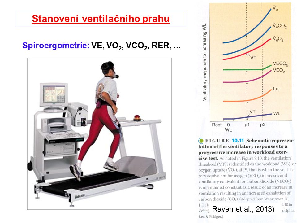 Stanovení ventilačního prahu Spiroergometrie: VE, VO2, VCO2, RER, ...