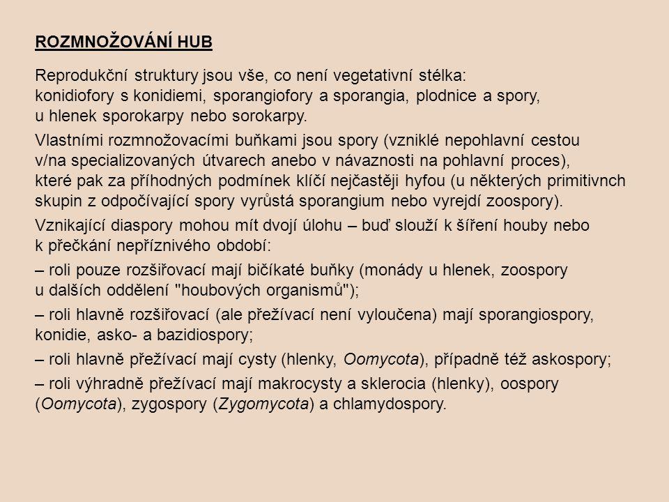 ROZMNOŽOVÁNÍ HUB Reprodukční struktury jsou vše, co není vegetativní stélka: konidiofory s konidiemi, sporangiofory a sporangia, plodnice a spory,