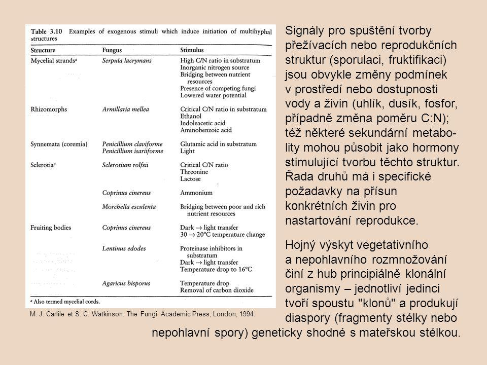 nepohlavní spory) geneticky shodné s mateřskou stélkou.