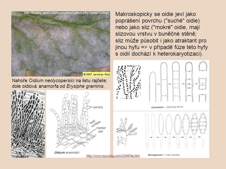 http://botany.upol.cz/atlasy/system/gallery.php entry=Oidium