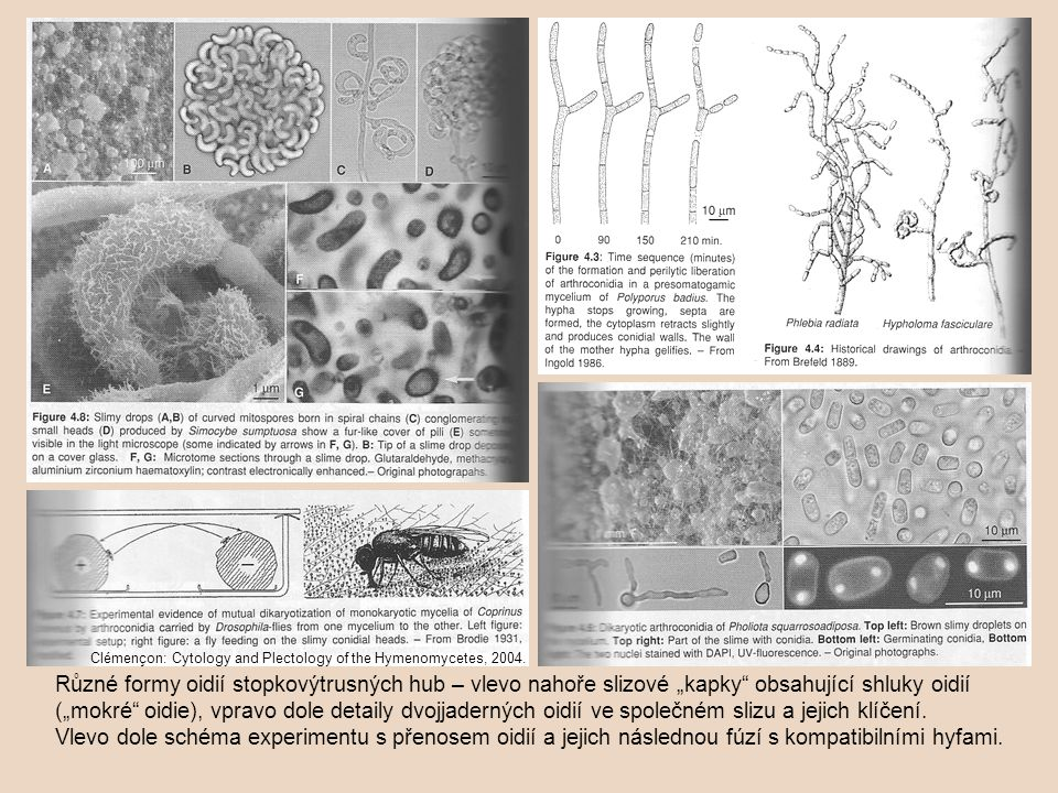 Clémençon: Cytology and Plectology of the Hymenomycetes, 2004.