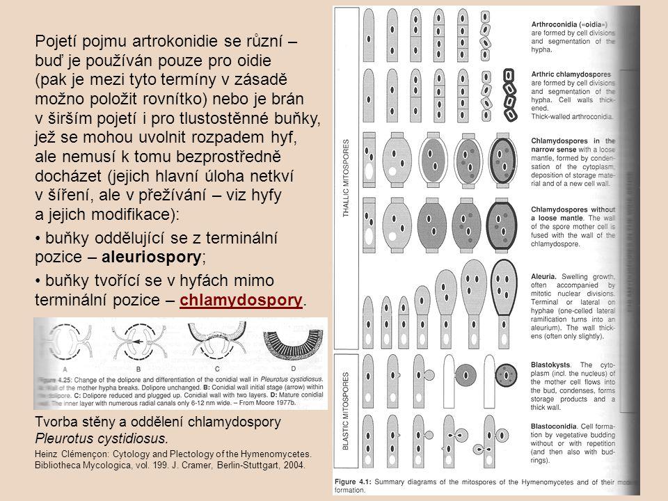 • buňky oddělující se z terminální pozice – aleuriospory;