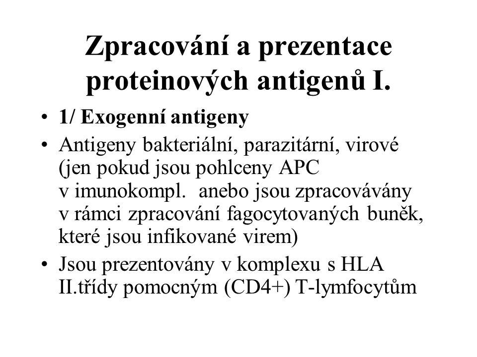 Zpracování a prezentace proteinových antigenů I.