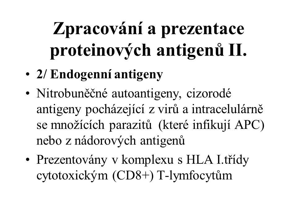 Zpracování a prezentace proteinových antigenů II.