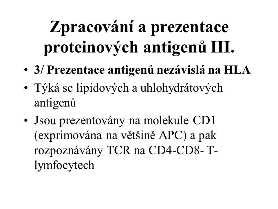 Zpracování a prezentace proteinových antigenů III.