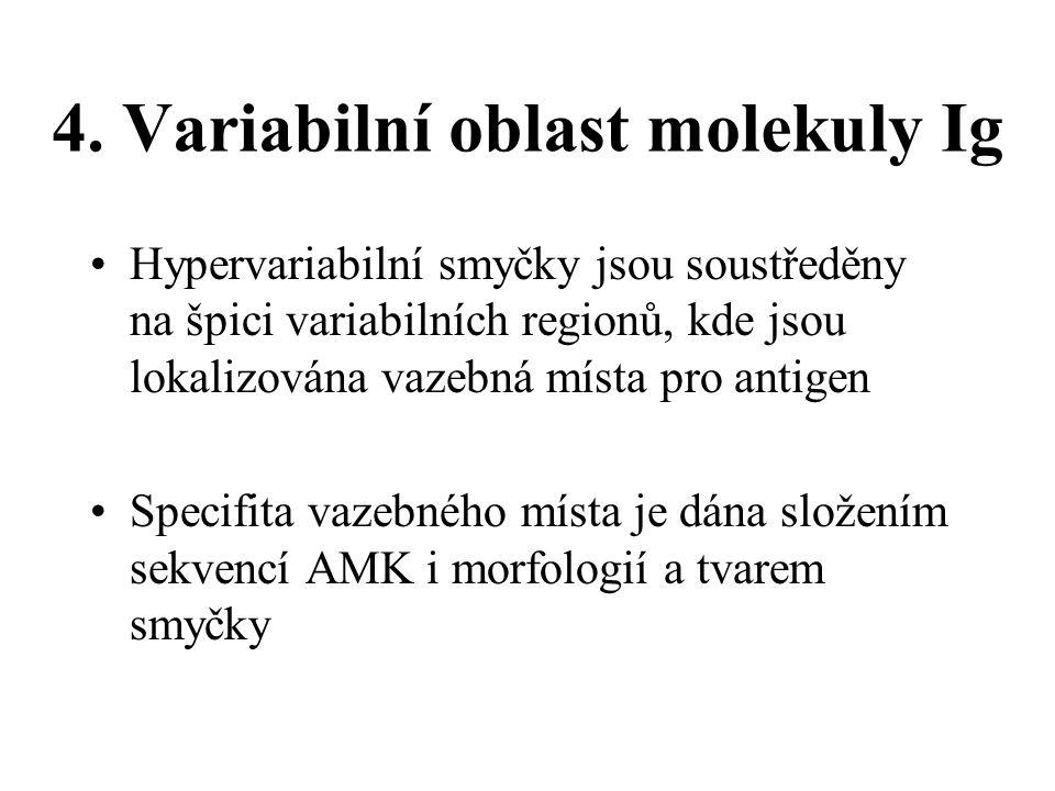 4. Variabilní oblast molekuly Ig
