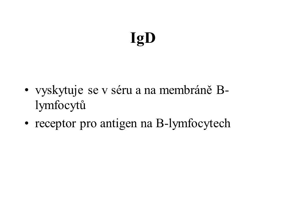 IgD vyskytuje se v séru a na membráně B-lymfocytů