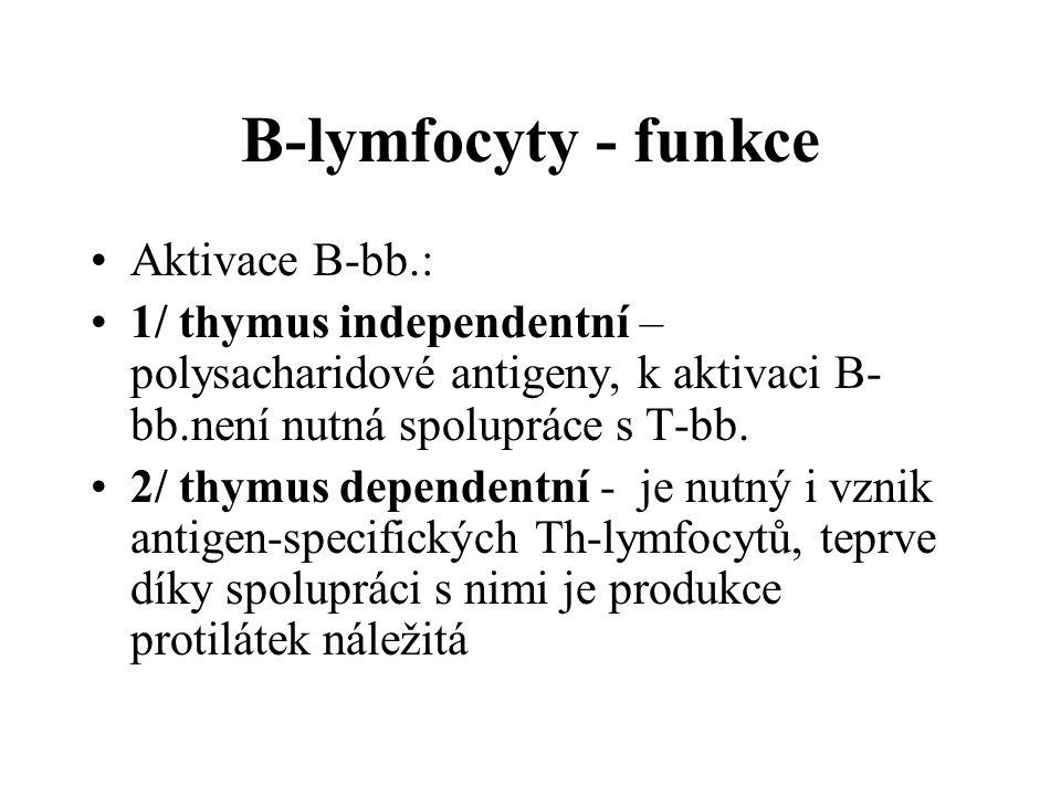 B-lymfocyty - funkce Aktivace B-bb.:
