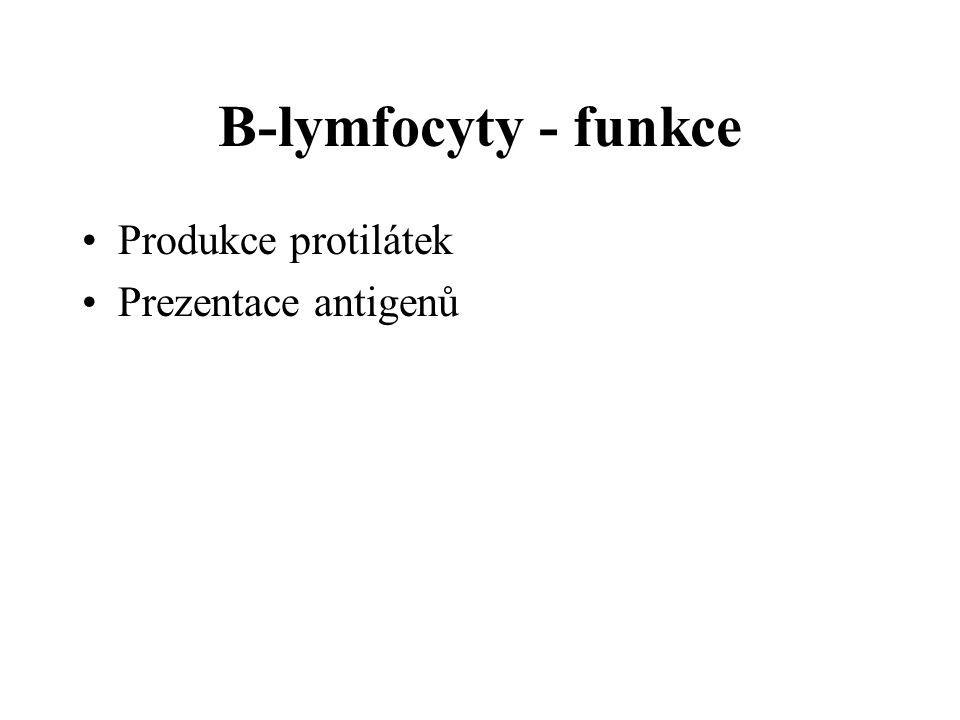B-lymfocyty - funkce Produkce protilátek Prezentace antigenů