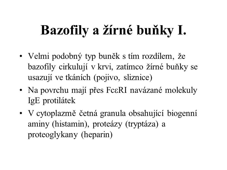 Bazofily a žírné buňky I.