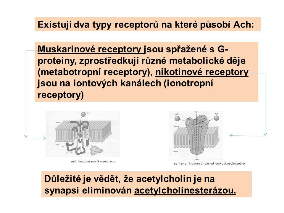 Existují dva typy receptorů na které působí Ach: