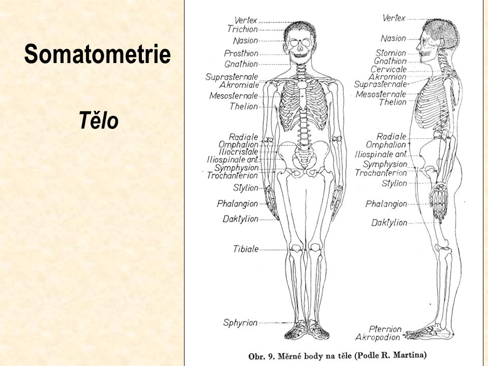 Somatometrie Tělo