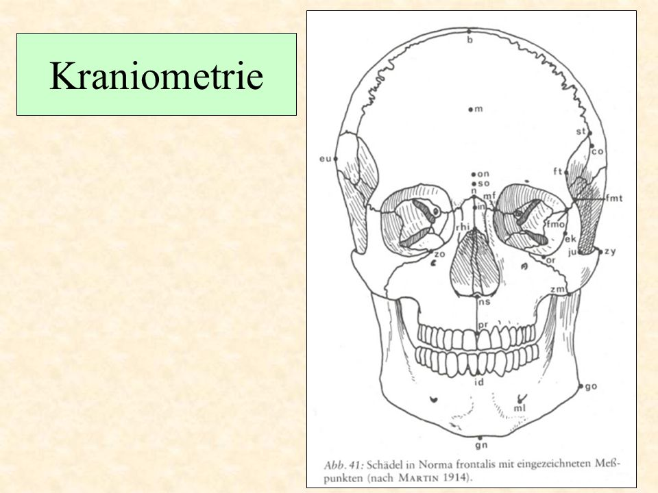 Kraniometrie