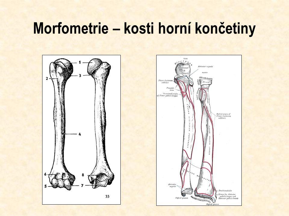 Morfometrie – kosti horní končetiny