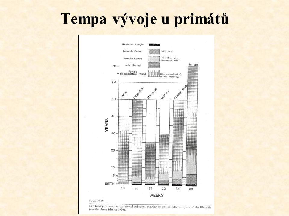 Tempa vývoje u primátů