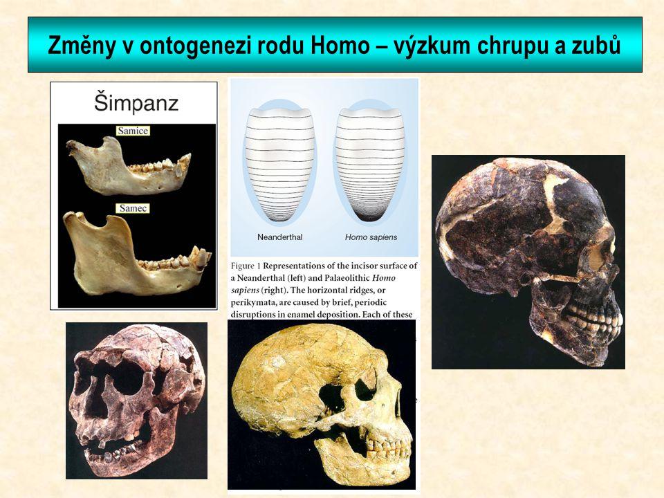 Změny v ontogenezi rodu Homo – výzkum chrupu a zubů