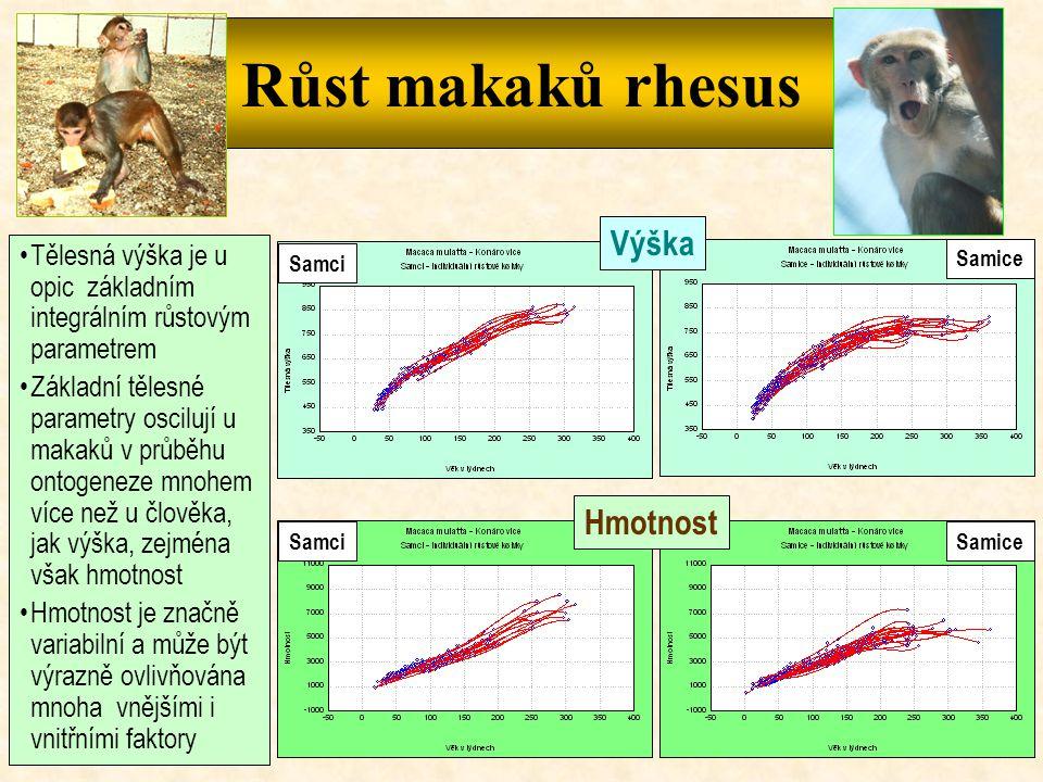 Růst makaků rhesus Výška Hmotnost